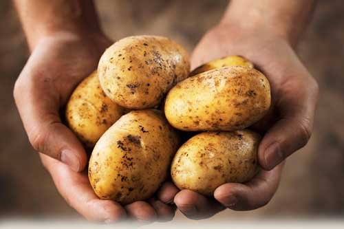 bulviu-dieta